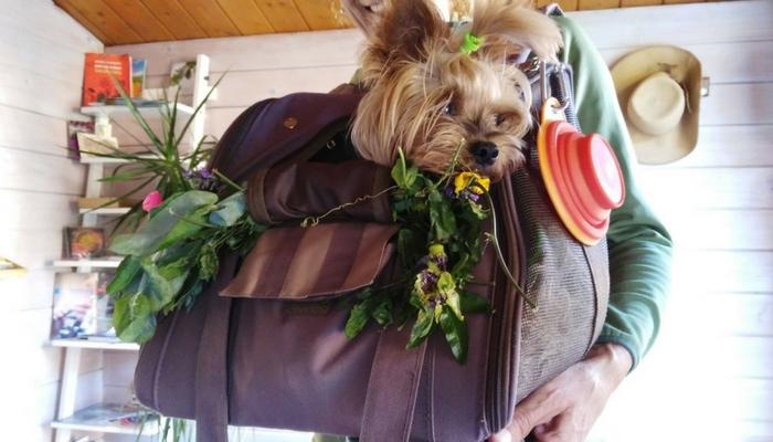 Razones y consejos para viajar a Lires con tu perro