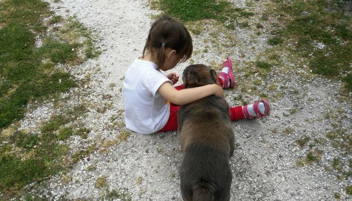 En Cabañas de Lires aceptamos mascotas